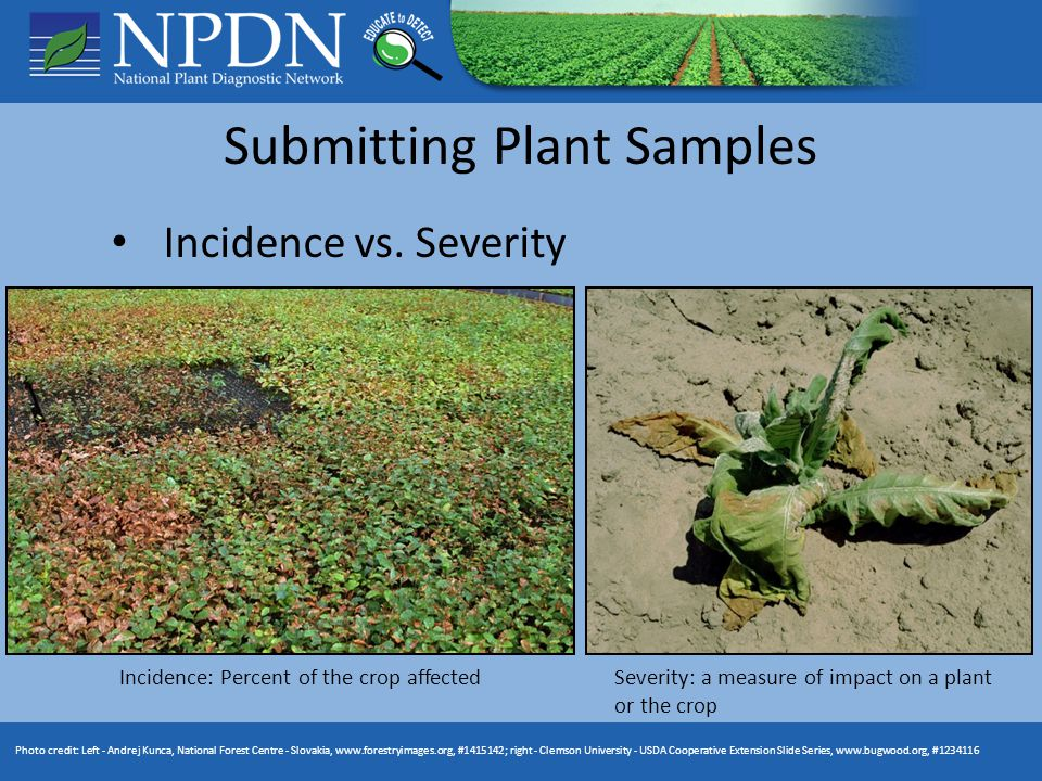Submitting Plant Samples Incidence vs.
