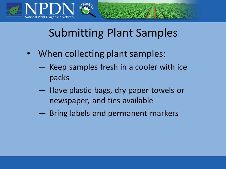 Submitting Plant Samples When collecting plant samples: ―Keep samples fresh in a cooler with ice packs ―Have plastic bags, dry paper towels or newspaper, and ties available ―Bring labels and permanent markers