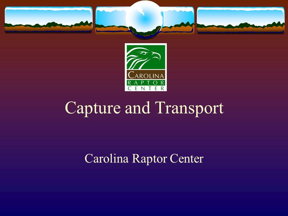 Capture and Transport Carolina Raptor Center