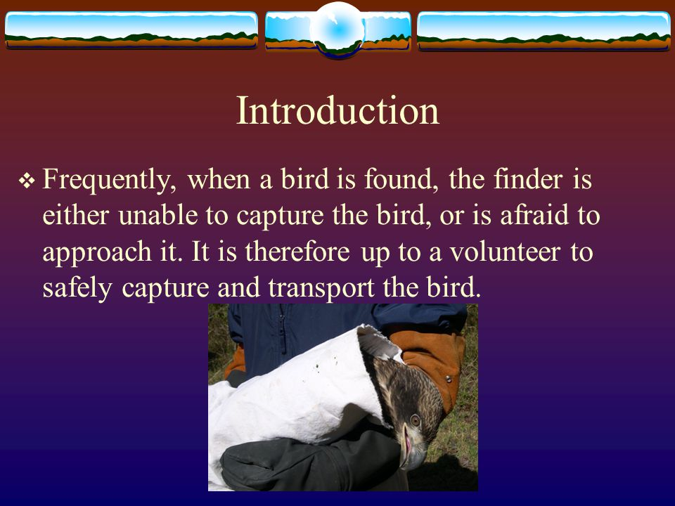 Introduction  Frequently, when a bird is found, the finder is either unable to capture the bird, or is afraid to approach it.