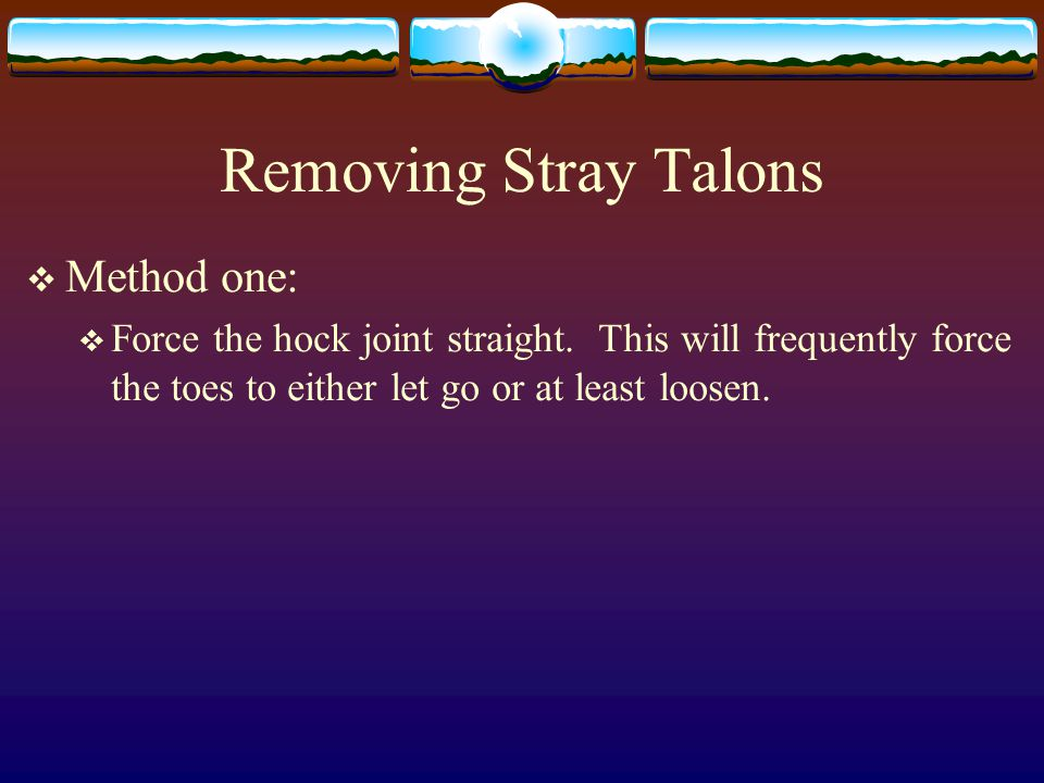 Removing Stray Talons  Method one:  Force the hock joint straight.