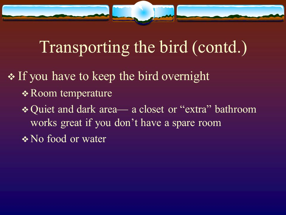 Transporting the bird (contd.)  If you have to keep the bird overnight  Room temperature  Quiet and dark area— a closet or extra bathroom works great if you don't have a spare room  No food or water