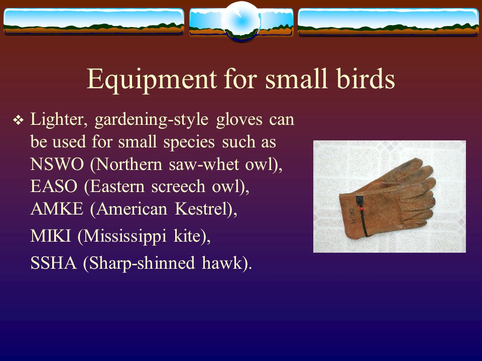 Equipment for small birds  Lighter, gardening-style gloves can be used for small species such as NSWO (Northern saw-whet owl), EASO (Eastern screech owl), AMKE (American Kestrel), MIKI (Mississippi kite), SSHA (Sharp-shinned hawk).