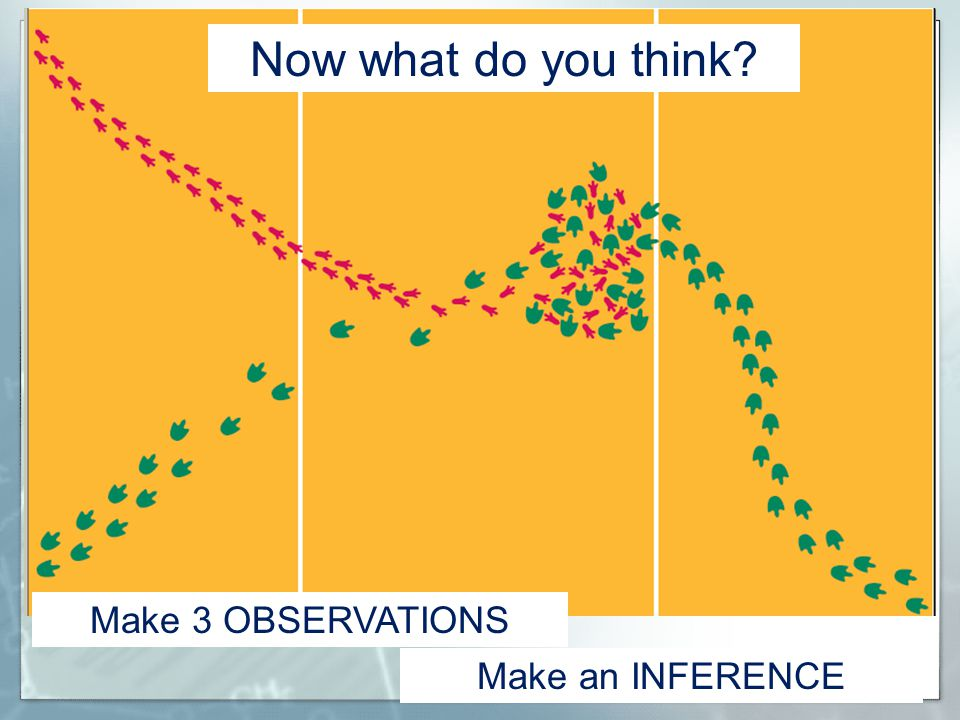 Now what do you think Make 3 OBSERVATIONS Make an INFERENCE