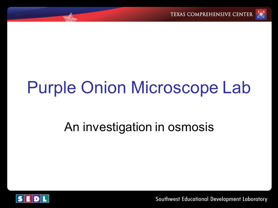 Purple Onion Microscope Lab An investigation in osmosis
