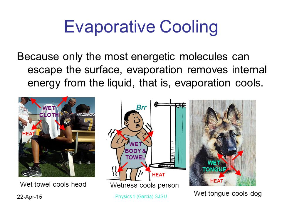 22-Apr-15 Physics 1 (Garcia) SJSU Evaporative Cooling Because only the most energetic molecules can escape the surface, evaporation removes internal energy from the liquid, that is, evaporation cools.