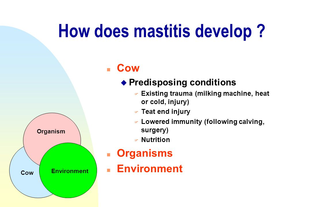 How does mastitis develop ? n Cow u Predisposing conditions F Existing trauma (milking machine, heat or cold, injury) F Teat end injury F Lowered immu