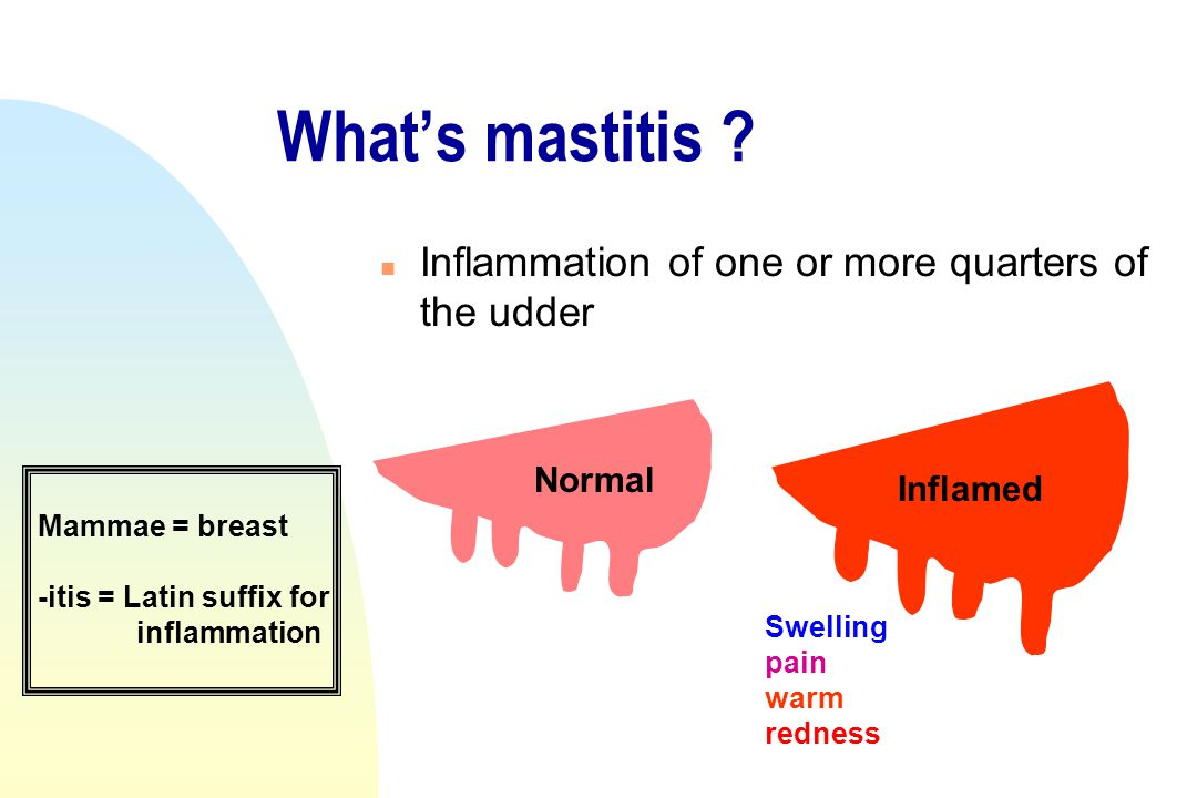What's mastitis ? n Inflammation of one or more quarters of the udder Normal Inflamed Swelling pain warm redness Mammae = breast -itis = Latin suffix