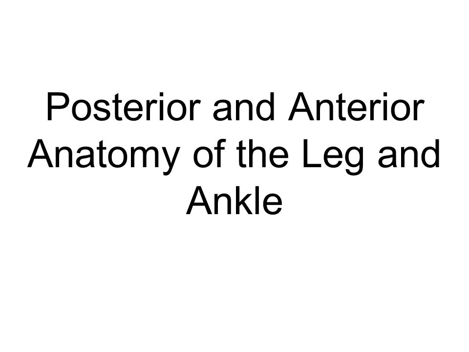 Popliteus O: Lateral Condyle of Femur I: Proximal Posterior Tibia A: Medial rotation of the tibiofemoral joint Knee Flexion