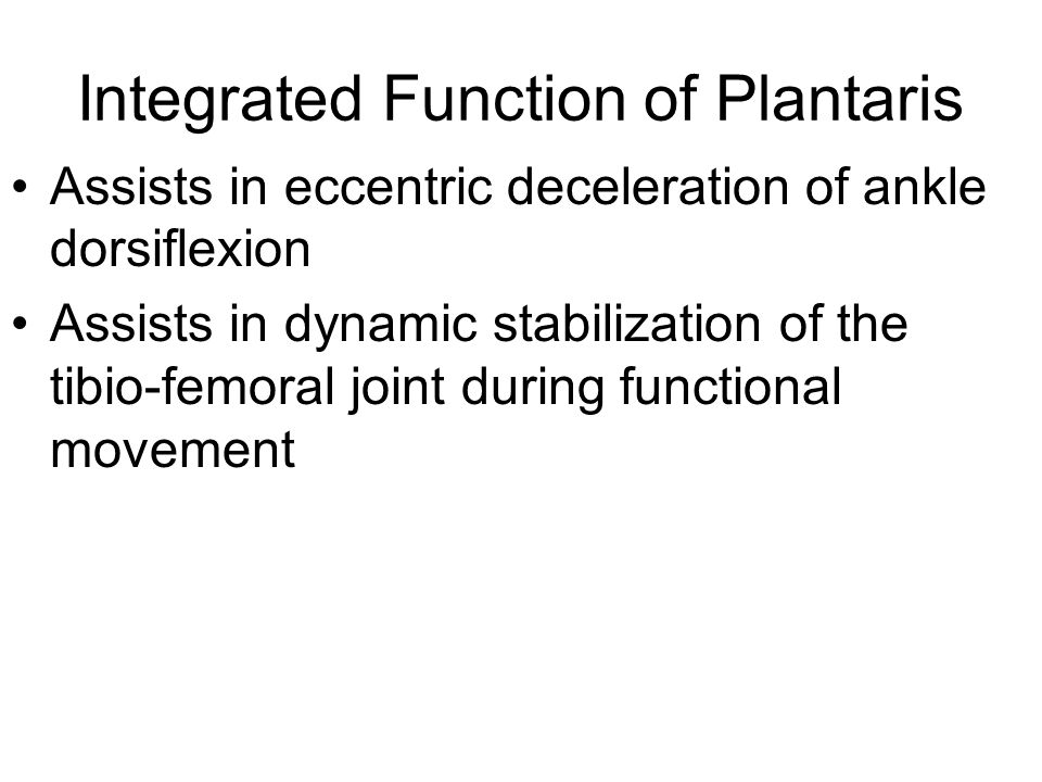 Integrated Function of Plantaris Assists in eccentric deceleration of ankle dorsiflexion Assists in dynamic stabilization of the tibio-femoral joint d