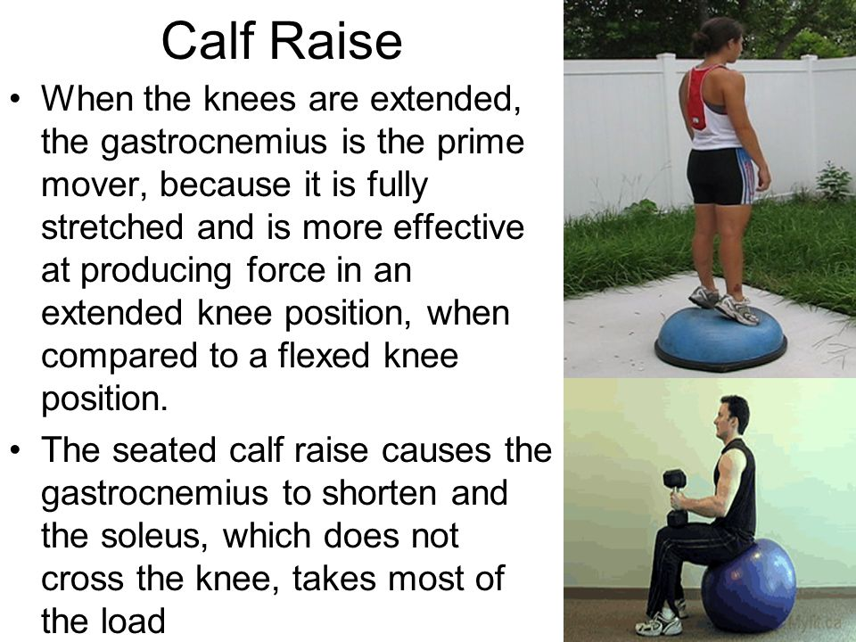 Calf Raise When the knees are extended, the gastrocnemius is the prime mover, because it is fully stretched and is more effective at producing force i