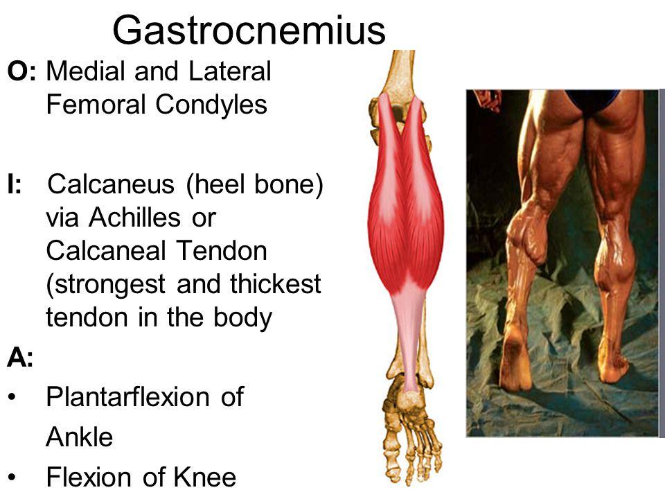Shin Splints Anterior shin splints occur in the front portion of the shin bone (tibia).
