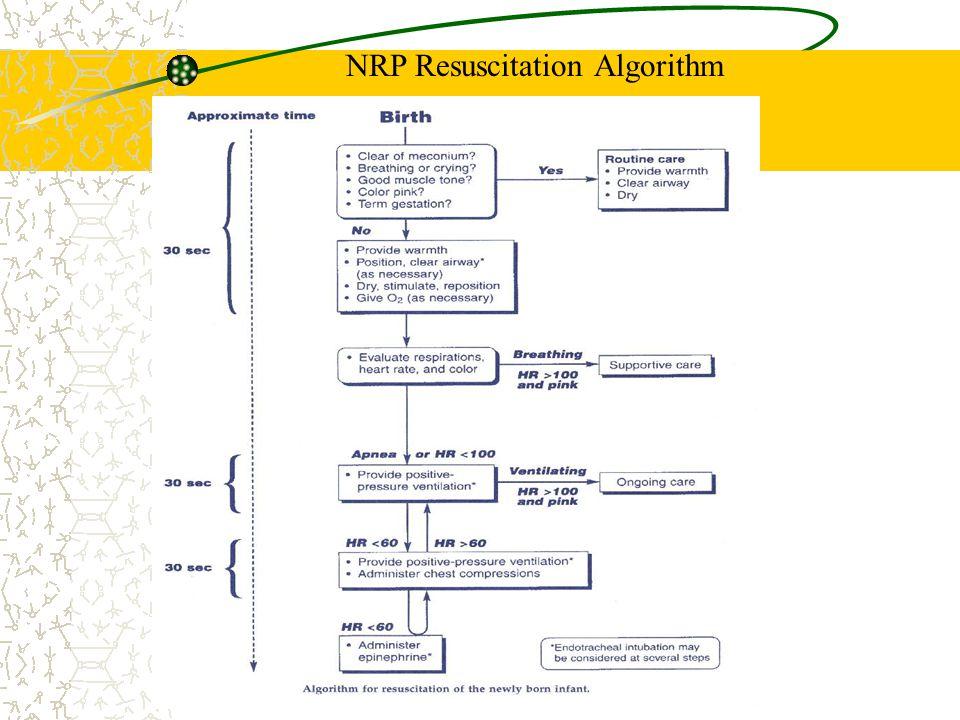 NRP Resuscitation Algorithm