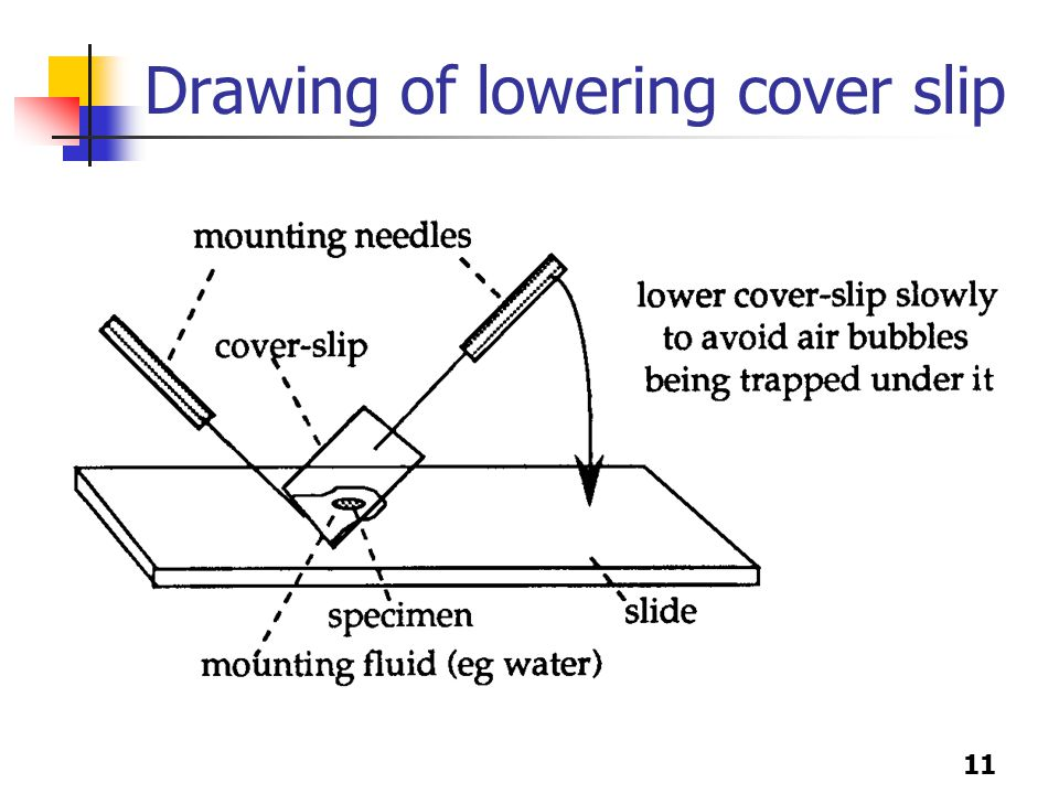 11 Drawing of lowering cover slip