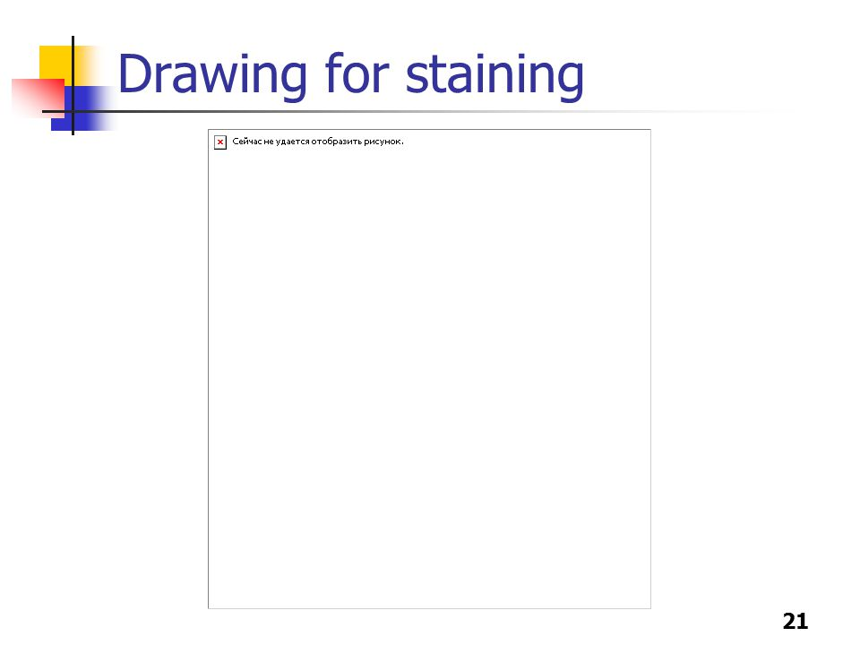 21 Drawing for staining
