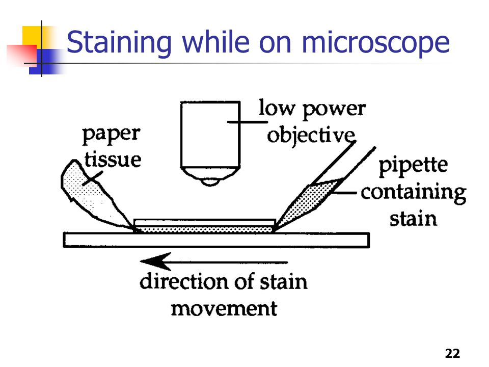 22 Staining while on microscope