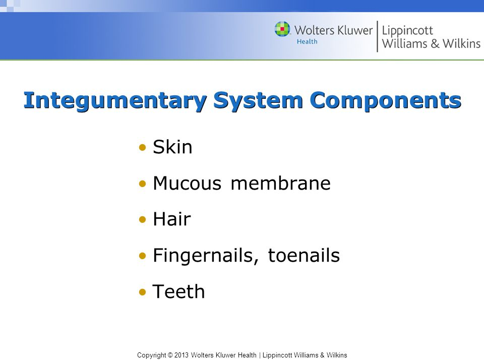 Copyright © 2013 Wolters Kluwer Health | Lippincott Williams & Wilkins Integumentary System Components Skin Mucous membrane Hair Fingernails, toenails Teeth