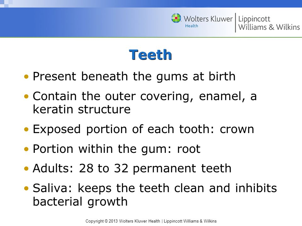 Copyright © 2013 Wolters Kluwer Health | Lippincott Williams & Wilkins Present beneath the gums at birth Contain the outer covering, enamel, a keratin structure Exposed portion of each tooth: crown Portion within the gum: root Adults: 28 to 32 permanent teeth Saliva: keeps the teeth clean and inhibits bacterial growth Teeth