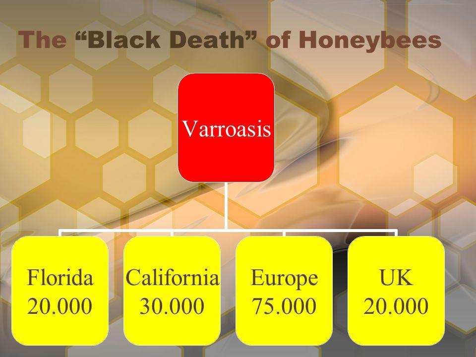 The Black Death of Honeybees Varroasis Florida 20.000 California 30.000 Europe 75.000 UK 20.000