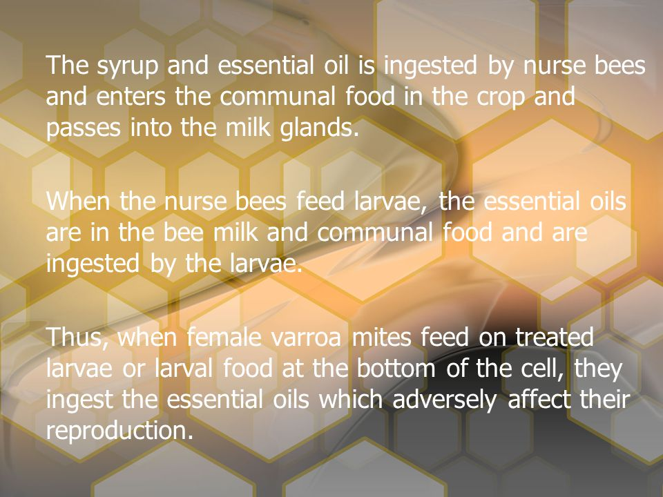 The syrup and essential oil is ingested by nurse bees and enters the communal food in the crop and passes into the milk glands.