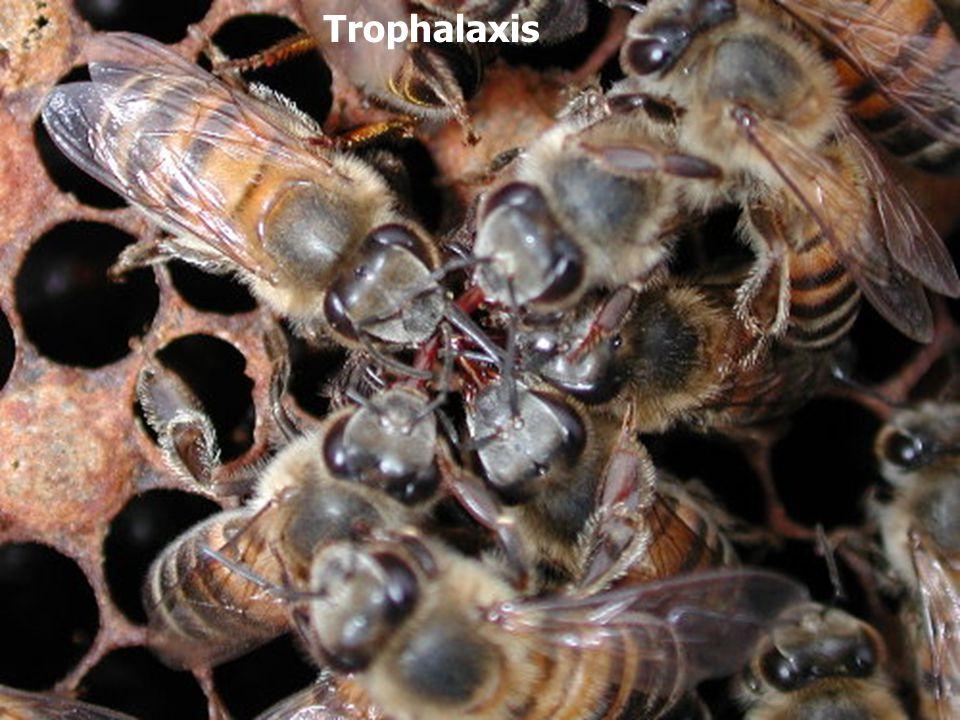 Trophalaxis