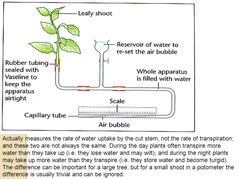Outline an experiment that you would set up to measure the effect of differenty environmental conditions on transpiration rate using a potometer: 30 mins Method the independent variable and how to change it the dependent variable and how to measure it the controlled factors and how to control them What type of graph would you draw.