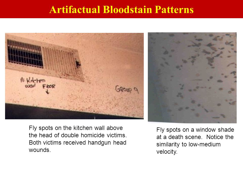 Fly spots on the kitchen wall above the head of double homicide victims. Both victims received handgun head wounds. Fly spots on a window shade at a d