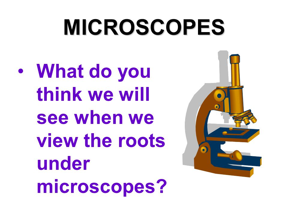 MICROSCOPES What do you think we will see when we view the roots under microscopes?