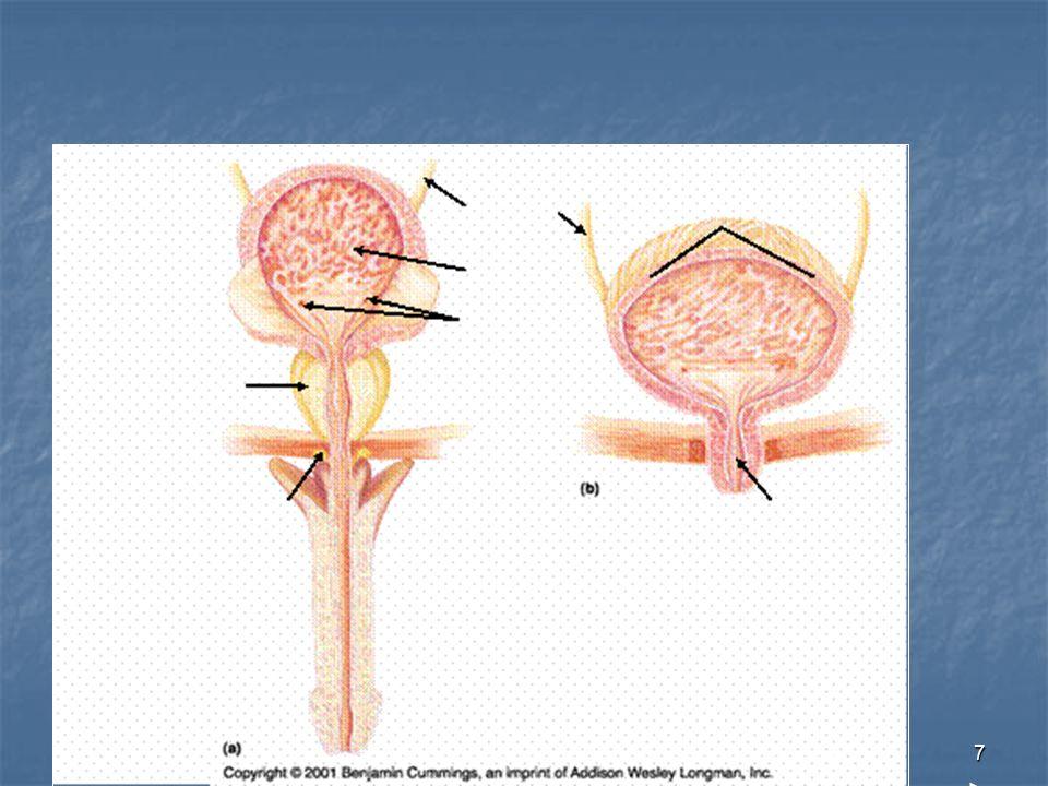 November 2004Richard Lake38 Risk factors of procedure Bowel perforation/ haemorrhage at cystostomy formation Bowel perforation/ haemorrhage at cystostomy formation Cystostomy complications, e.g.