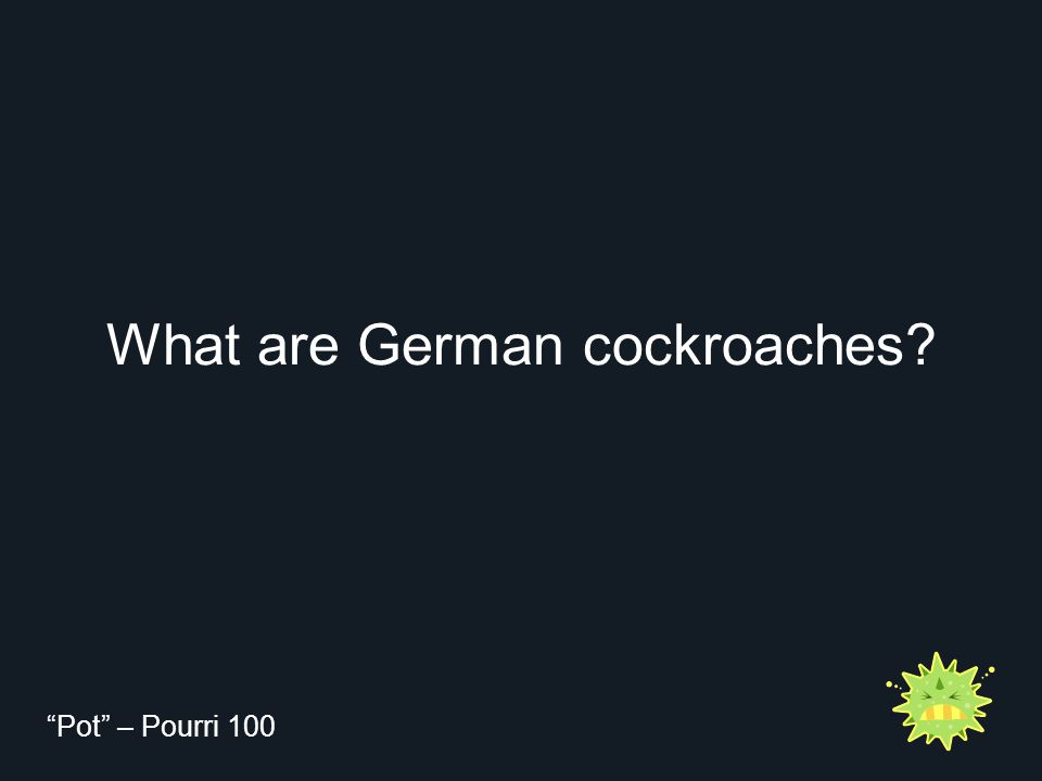 "What are German cockroaches? ""Pot"" – Pourri 100"