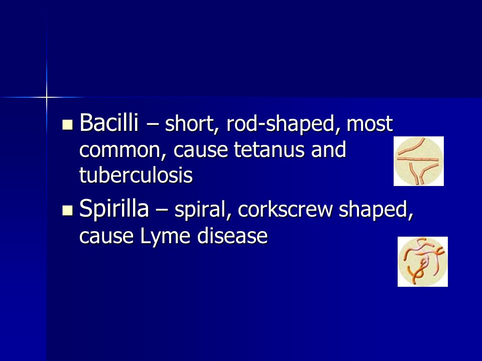 Bacilli – short, rod-shaped, most common, cause tetanus and tuberculosis Bacilli – short, rod-shaped, most common, cause tetanus and tuberculosis Spir
