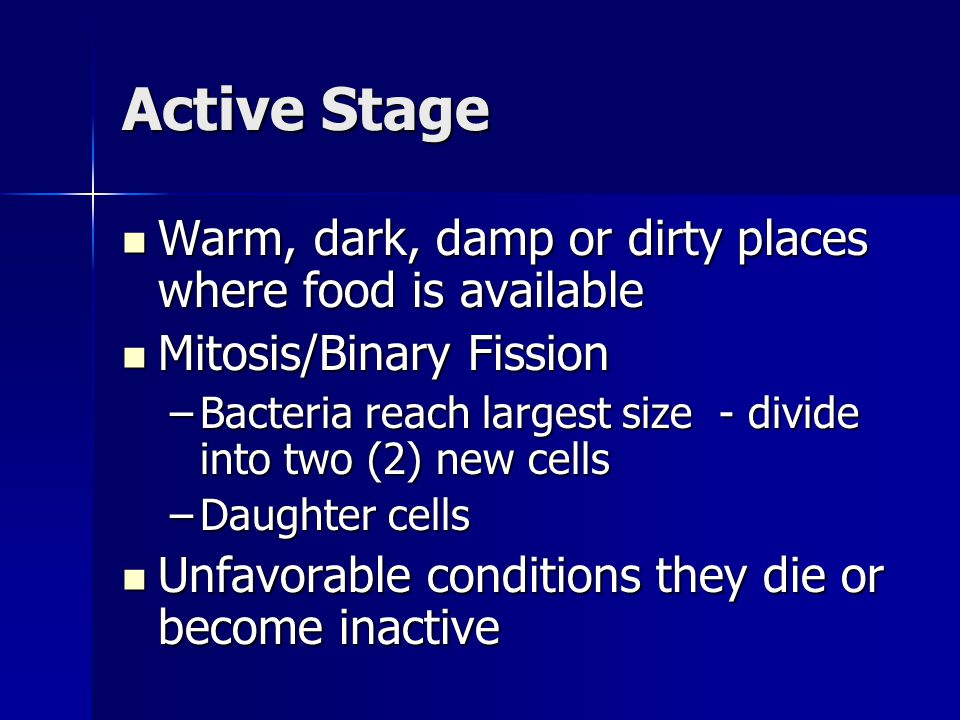 Active Stage Warm, dark, damp or dirty places where food is available Warm, dark, damp or dirty places where food is available Mitosis/Binary Fission
