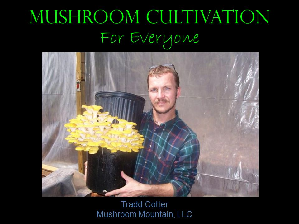 Mushroom Cultivation For Everyone Tradd Cotter Mushroom Mountain, LLC
