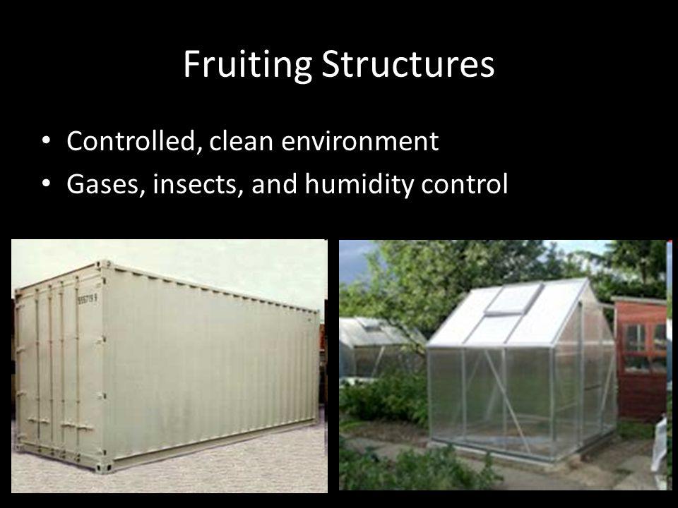 Fruiting Structures Controlled, clean environment Gases, insects, and humidity control