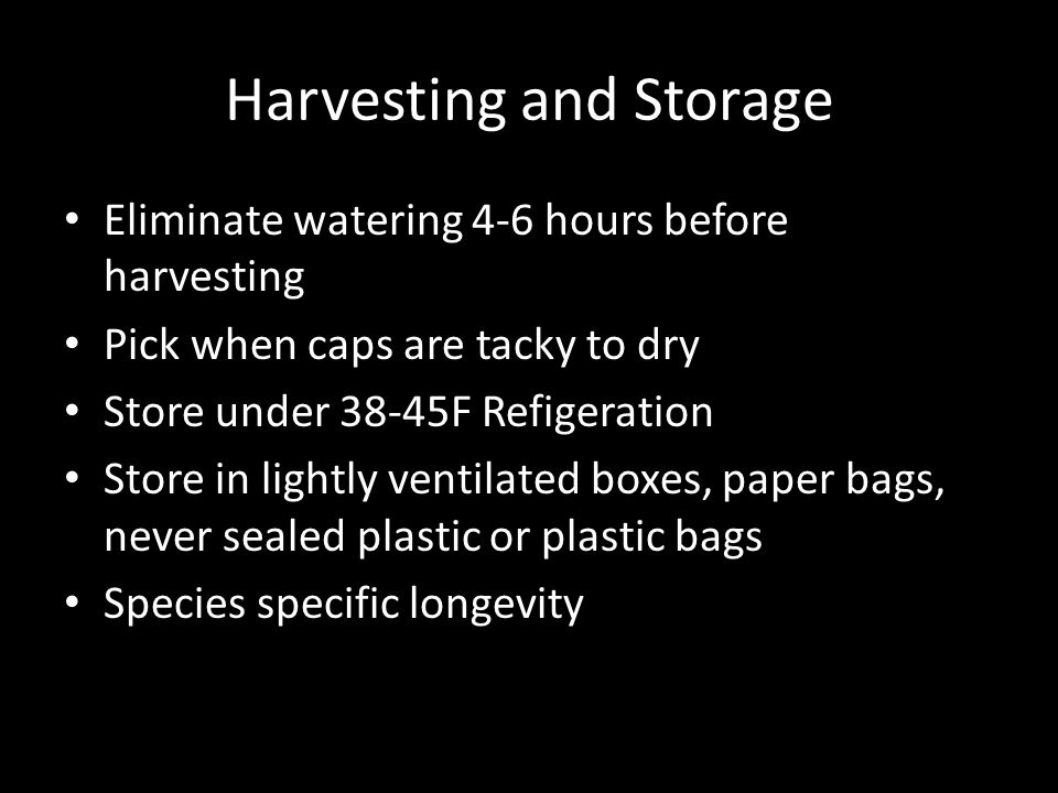 Harvesting and Storage Eliminate watering 4-6 hours before harvesting Pick when caps are tacky to dry Store under 38-45F Refigeration Store in lightly ventilated boxes, paper bags, never sealed plastic or plastic bags Species specific longevity