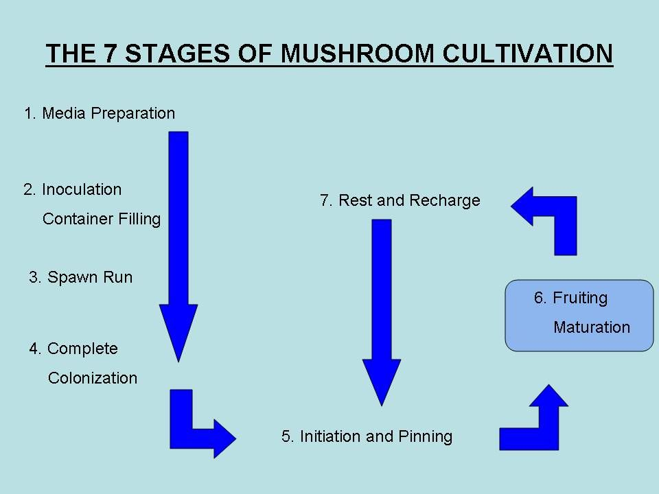 VOLUME : EXPOSED SURFACE #1 KEY TO SUCCESSFUL COMMERCIAL PRODUCTION DETERMINE BEST RATIO MINIMIZE EXPOSE SURFACE AREA TO MAXIMIZE YIELDS MUSHROOMS ARE PHOTOTROPHIC AND STIMULATED BY LIGHT BLACK OR OPAQUE CONTAINERS BEST