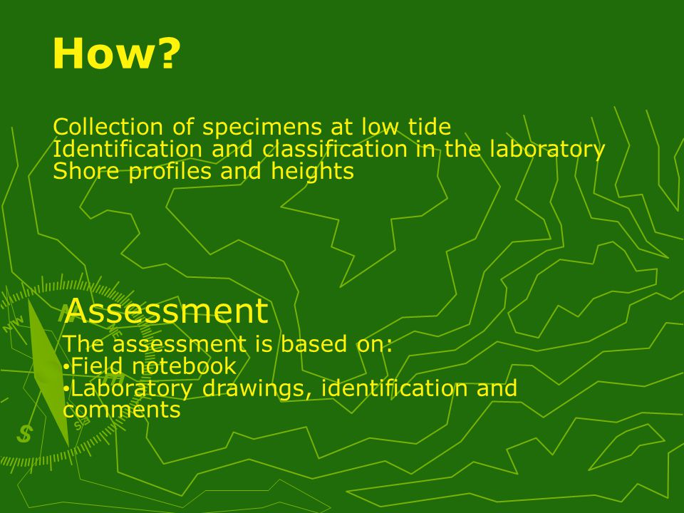 Collection of specimens at low tide Identification and classification in the laboratory Shore profiles and heights The assessment is based on: Field notebook Laboratory drawings, identification and comments How.