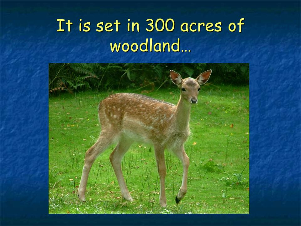 It is set in 300 acres of woodland…