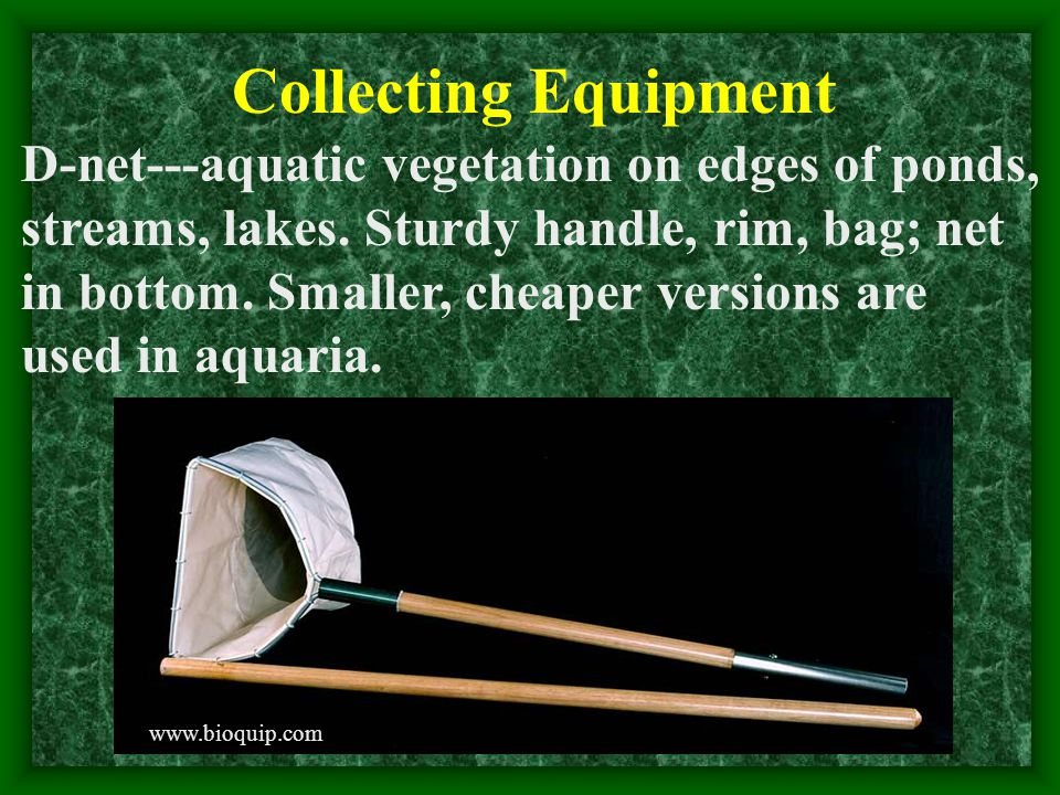 Collecting Equipment D-net---aquatic vegetation on edges of ponds, streams, lakes.