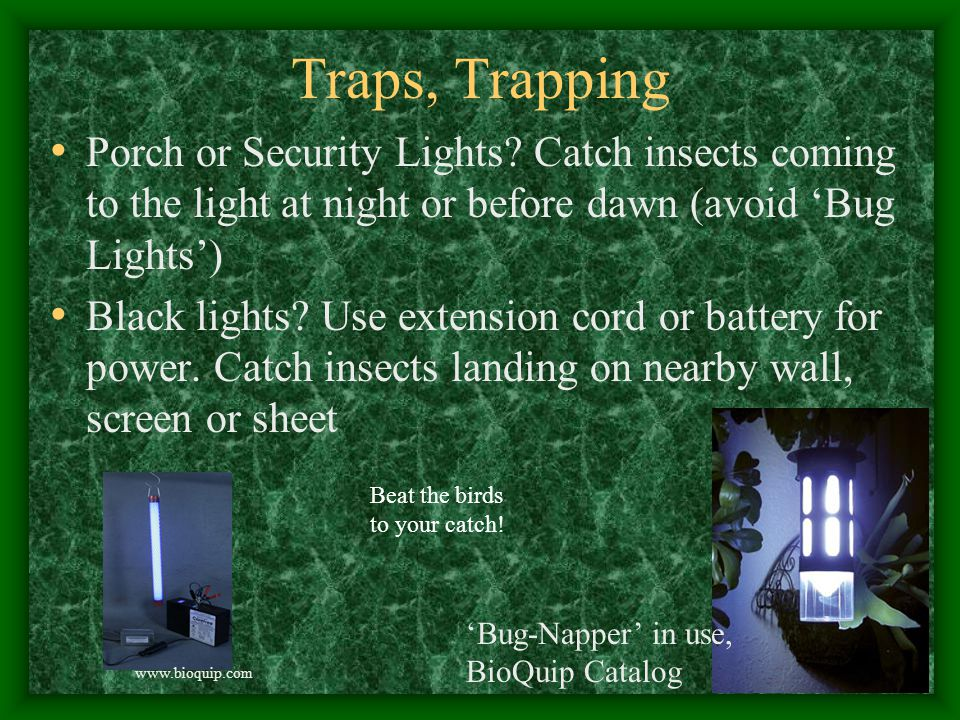 Traps, Trapping Porch or Security Lights.