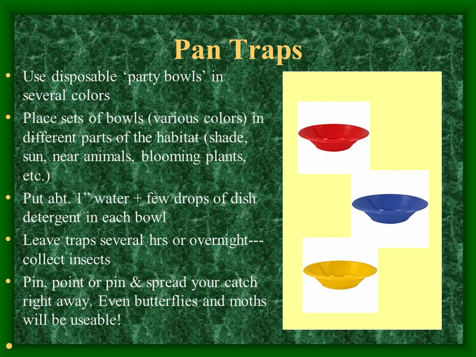 Pan Traps Use disposable 'party bowls' in several colors Place sets of bowls (various colors) in different parts of the habitat (shade, sun, near anim