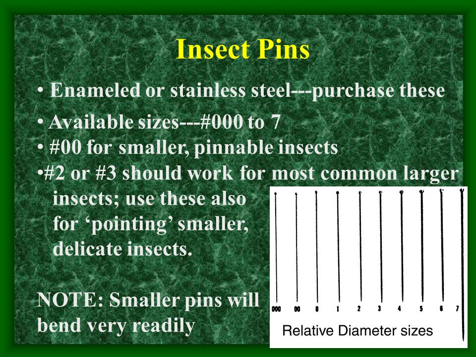 Insect Pins Enameled or stainless steel---purchase these Available sizes---#000 to 7 #00 for smaller, pinnable insects #2 or #3 should work for most common larger insects; use these also for 'pointing' smaller, delicate insects.