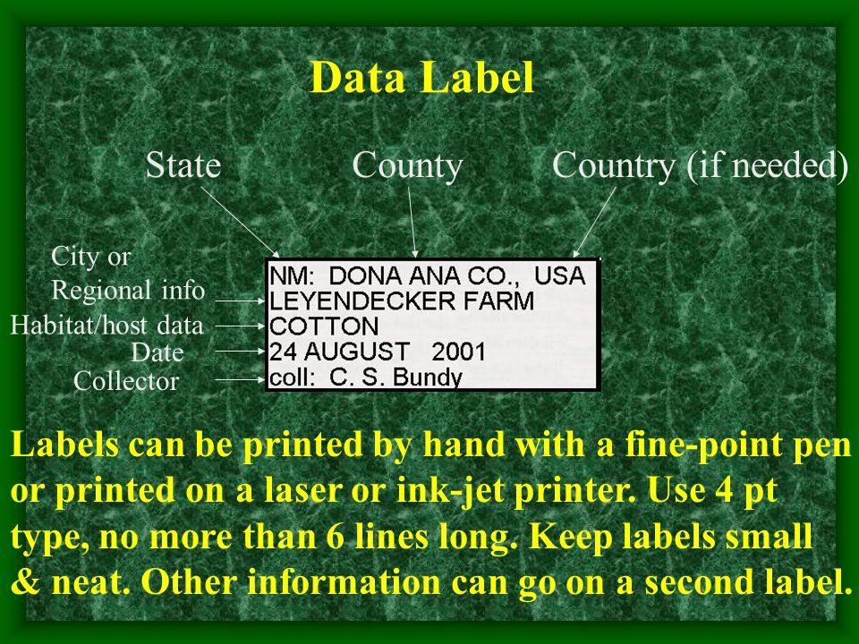 StateCountyCountry (if needed) City or Regional info Habitat/host data Date Collector Data Label Labels can be printed by hand with a fine-point pen o