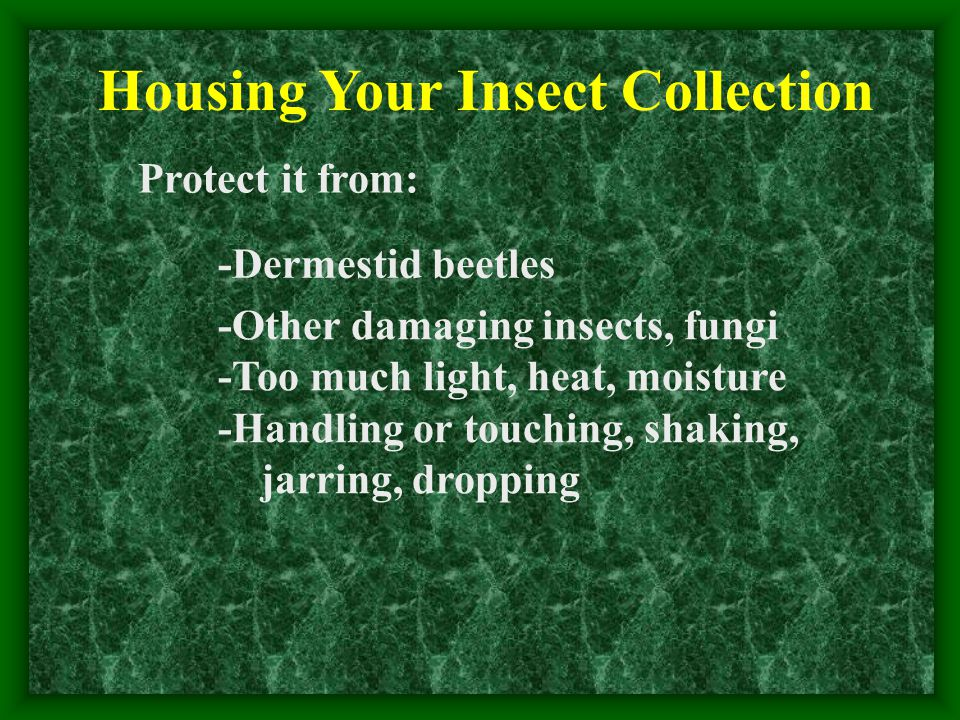 Protect it from: -Dermestid beetles -Other damaging insects, fungi -Too much light, heat, moisture -Handling or touching, shaking, jarring, dropping Housing Your Insect Collection