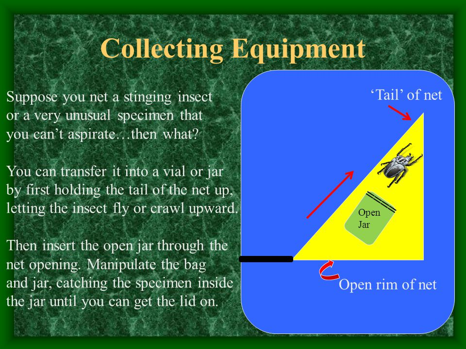 Collecting Equipment Suppose you net a stinging insect or a very unusual specimen that you can't aspirate…then what.