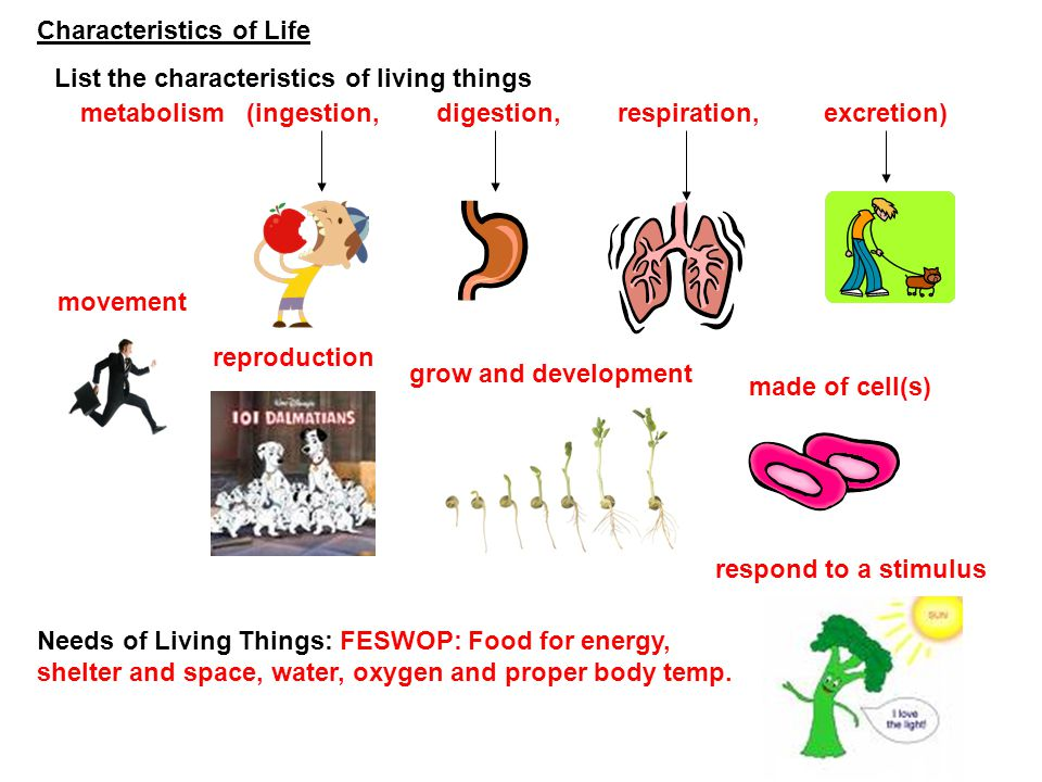 Characteristics of Life List the characteristics of living things metabolism (ingestion, digestion, respiration, excretion) movement reproduction made
