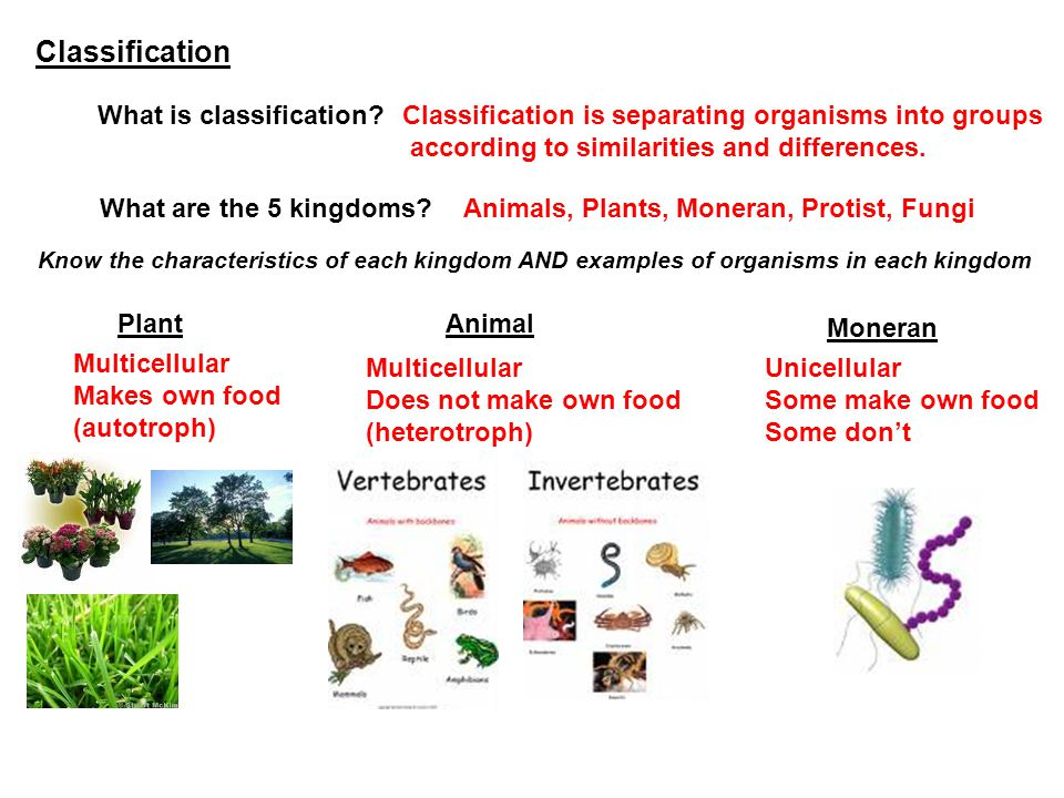 Fungi Multicellular/ Unicellular Does not make their own food.