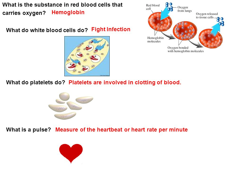 Fight Infection Platelets are involved in clotting of blood. Hemoglobin What is the substance in red blood cells that carries oxygen? What do white bl