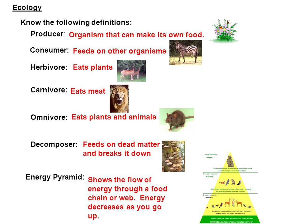 Know the following definitions: Producer: Organism that can make its own food. Consumer: Feeds on other organisms Herbivore:Eats plants Carnivore: Eat