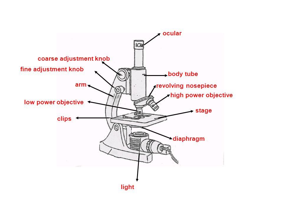 ocular body tube revolving nosepiece high power objective stage diaphragm light clips low power objective arm fine adjustment knob coarse adjustment k